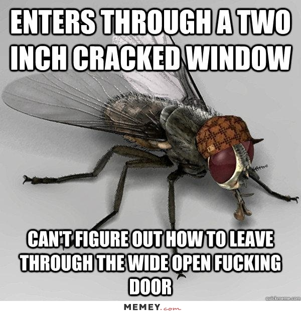 funny-flies-window-door